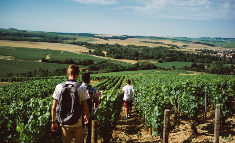 Balade dans les vignobles de Chablis