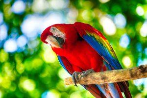 Parc animalier immersif : Parrot World