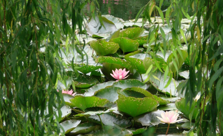 Le Jardin d'eau de la Fondation Monet