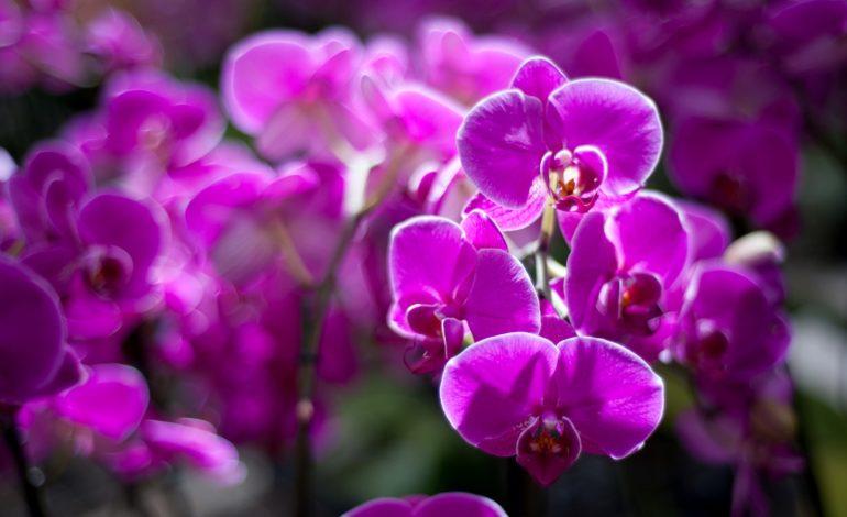 Serres d'orchidées Vacherot-Lecoufle